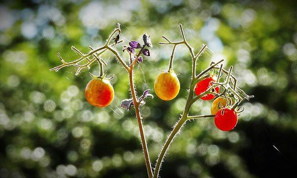 Ein Hausgarten – Spaß für die ganze Familie